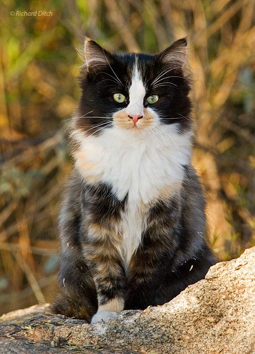 Feral Cat, Gilbert Water Ranch