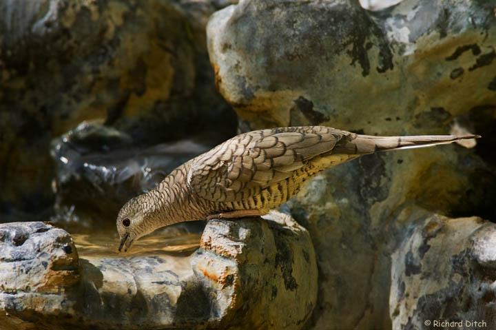 RichS Backyard Birds : Backyard Bird Photography  Rich Ditchs Photography Blog