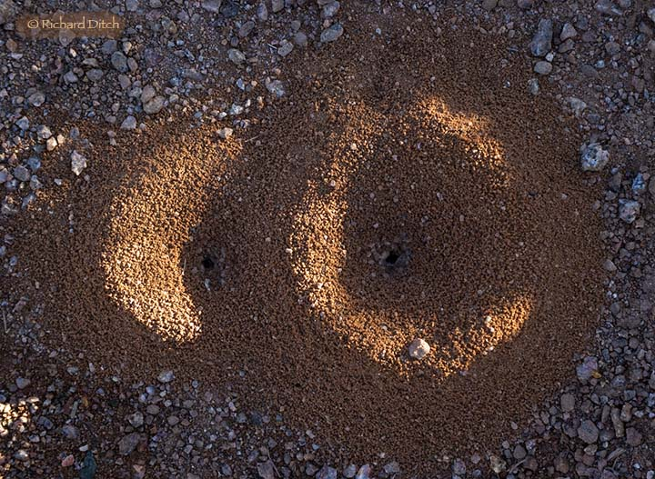 Insect Mounds, AZ