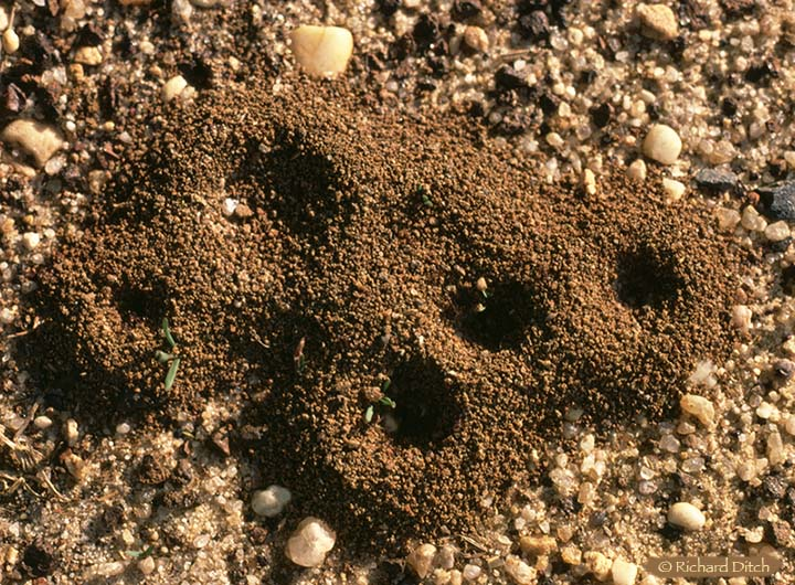 Ant Mounds, NJ