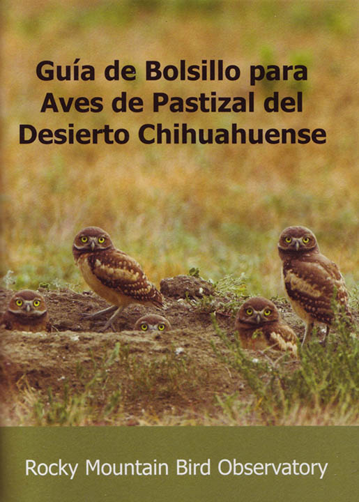 Chihuahuan Desert bird guide front cover