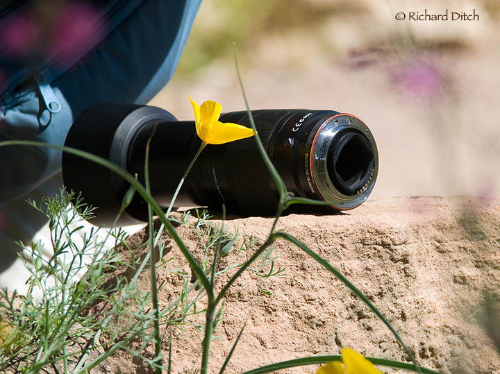 Lens on a Rock