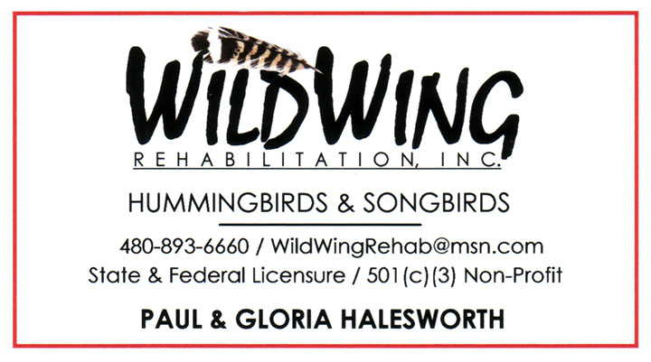 WildWing rehabilitation