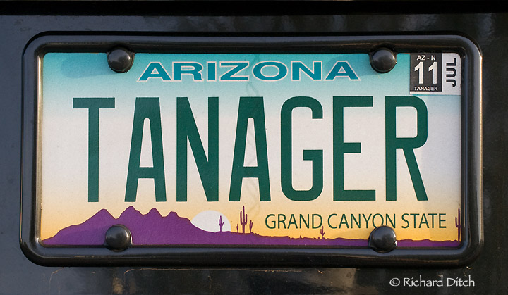 TANAGER Vanity plate