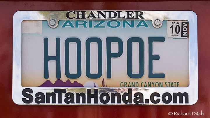 HOOPOE vanity plate