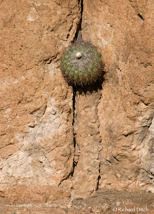 Cactus on vertical wall