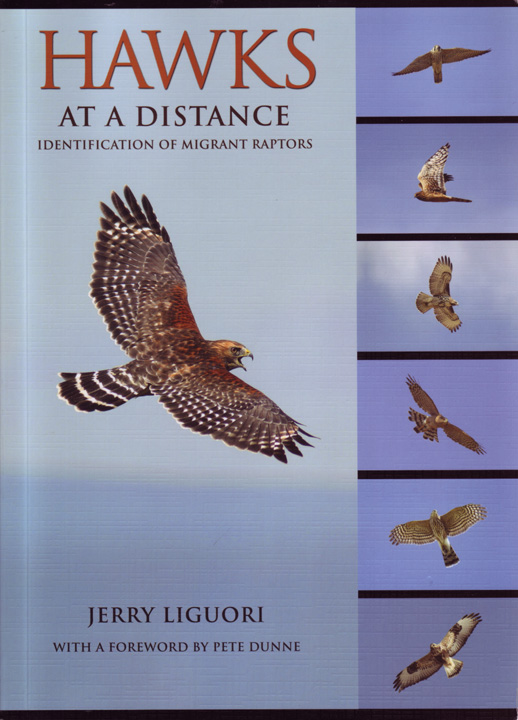 Hawks at a Distance - Liguori