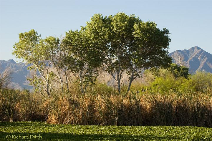 Tres Rios Tree