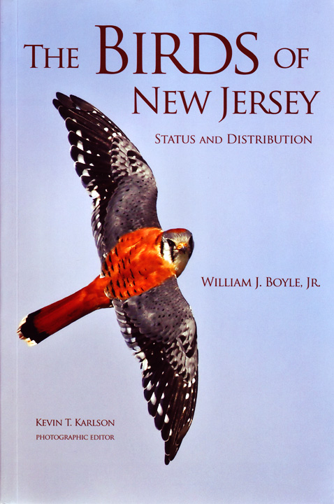 Birds of NJ - Boyle