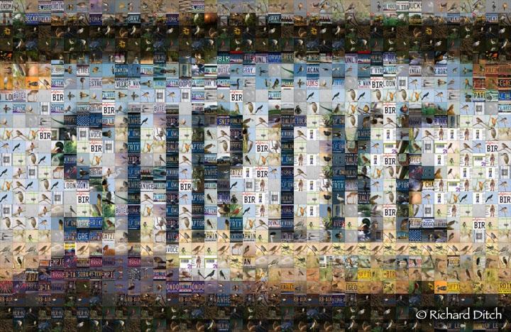 SHRIKE Mosaic