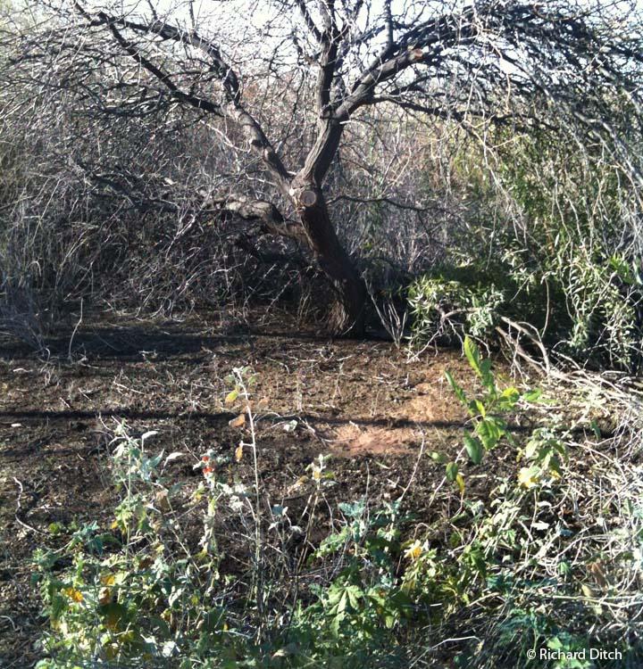 GWR cut tree